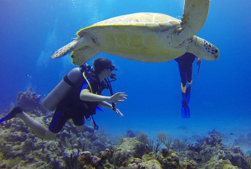tortues corail playa del carmen au mexique
